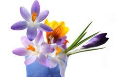 Flores multi del azafrán Imagen de archivo libre de regalías