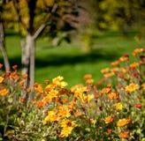 Flores multicoloras en fondo borroso imagen de archivo libre de regalías