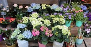 Flores multicoloras en potes Foto de archivo
