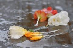 Flores murchos da mola com gelo Imagem de Stock