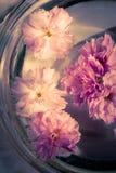 Flores na água imagens de stock royalty free