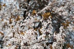 Flores na árvore Fotografia de Stock Royalty Free