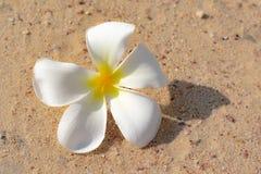 Flores na areia fotografia de stock