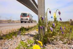 Flores na borda da estrada Fotografia de Stock Royalty Free
