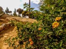 Flores na borda da estrada em um dia ensolarado foto de stock