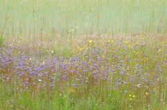 Flores na borda do campo Fotografia de Stock Royalty Free