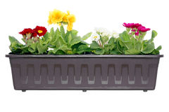 Flores na caixa de indicador Foto de Stock Royalty Free