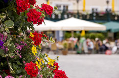 Flores na cena do pátio Foto de Stock