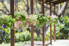 Flores na cesta de suspensão Fotografia de Stock