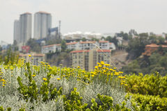Flores na cidade Imagem de Stock