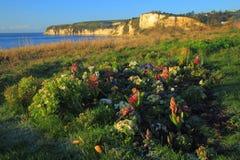 Flores na costa jurássico Imagem de Stock Royalty Free