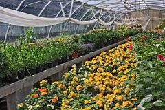 Flores na estufa Imagem de Stock
