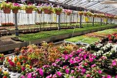 Flores na estufa Imagens de Stock Royalty Free