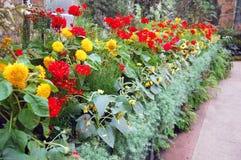 Flores na estufa Foto de Stock