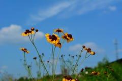 Flores na flor fotos de stock royalty free