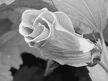 Flores na flor Fotografia de Stock Royalty Free