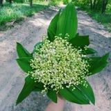Flores na floresta Imagem de Stock Royalty Free