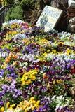 Flores na frente do perfumerie em Capri, Itália Fotografia de Stock
