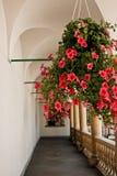 Flores na galeria Fotografia de Stock Royalty Free