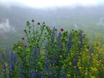Flores na garganta do karmadon Imagens de Stock Royalty Free
