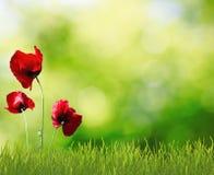 Flores na grama Imagem de Stock Royalty Free