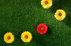 Flores na grama Fotografia de Stock