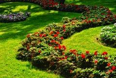 Flores na grama verde Foto de Stock