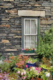 Flores na jarda dianteira Imagem de Stock Royalty Free