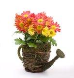 Flores na lata molhando Fotografia de Stock Royalty Free