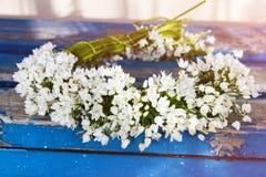 Flores na madeira Imagens de Stock Royalty Free