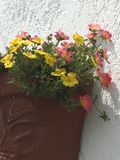 Flores na manhã fotografia de stock