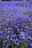 Flores na mola Fotos de Stock Royalty Free