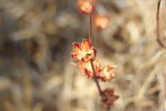 Flores na mola Fotos de Stock