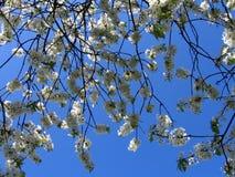 Flores na mola Fotografia de Stock