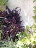 Flores na mola Foto de Stock