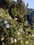 Flores na montanha Imagem de Stock Royalty Free