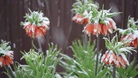 Flores na neve filme