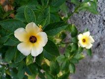 Flores na parede Fotografia de Stock