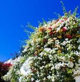 Flores na parede. Imagem de Stock Royalty Free