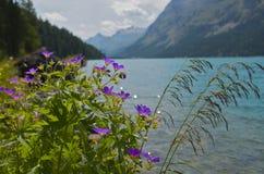 Flores na parte dianteira da água foto de stock