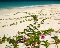 Flores na praia Imagens de Stock Royalty Free