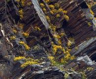 Flores na rocha Imagens de Stock