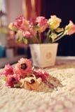Flores na soleira Imagens de Stock
