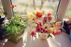 Flores na soleira Fotografia de Stock Royalty Free