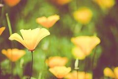 Flores na tarde fotografia de stock