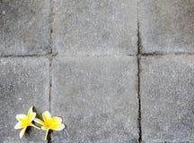 Flores na textura de pedra Fotos de Stock