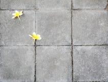 Flores na textura do tijolo Foto de Stock