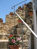 Flores nas escadas Fotos de Stock Royalty Free