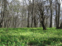 Flores nas florestas Fotos de Stock