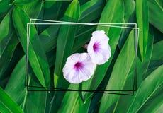 Flores nas folhas para o fundo imagens de stock